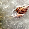 Feb.22/13  The sun came out today . She loved the warmth and sunlight. It lifted my mood to walk. A leaf in ice.