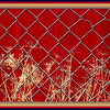 """January 26,2013   This reminds me of a Punch and Judy show , or the curtain before a play , but it is a red painted,steel fence backing a little shed in a back yard . Looks like a potting shed, with flower pots and a few drying plants scattered about in between this chain link fence and the colorful wall. I shot a few captures, and was thinking I'd get some of those whimsical looking , artsy shots but this was the only one of clarity!   Love the brightness in a cold Winter month.   Thank you for putting me up in number one! Paul might be right about the naps , but they are actually """"sleep ins"""" for as long as I want! Woohoo"""